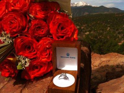 Rose Proposal