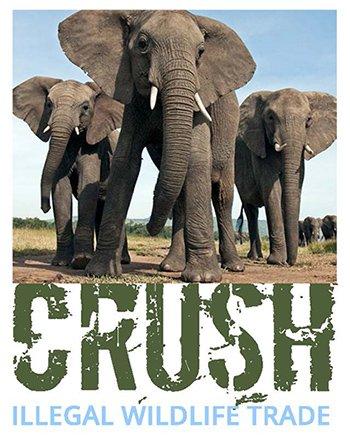 ivory crush